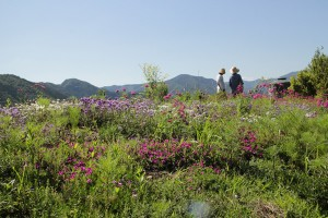 13 果無春の花